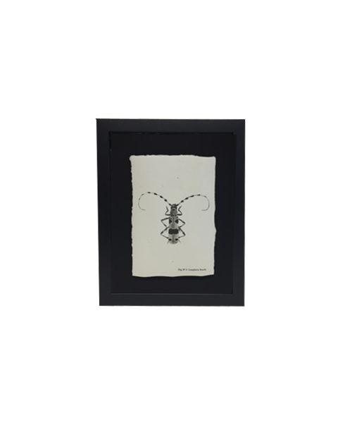 Zeefdruk longhorn beetle