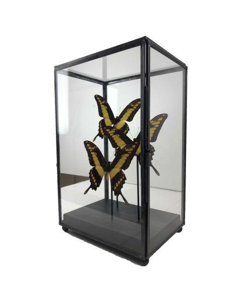 Vitrine met gele vlinders