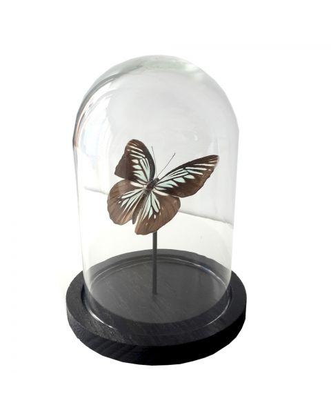 Kleine stolp met vlinder lichtblauw en zwart