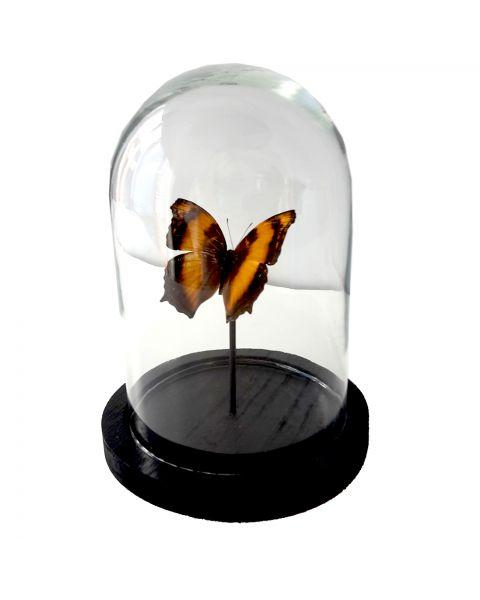 Kleine stolp met vlinder lichtoranje