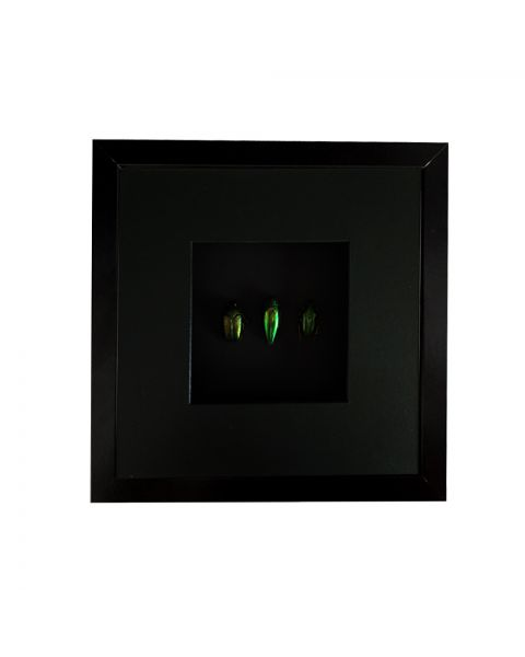 Fotolijstje torretjes groen