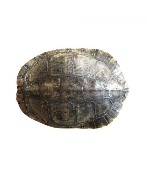 Schildpad schild