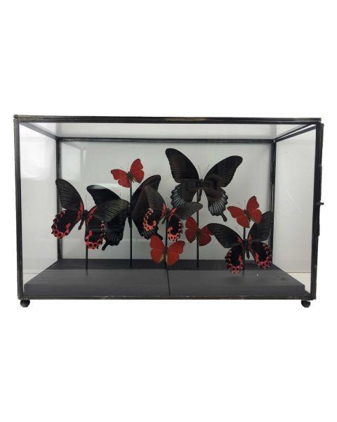 Vitrine met  rode Vlinders